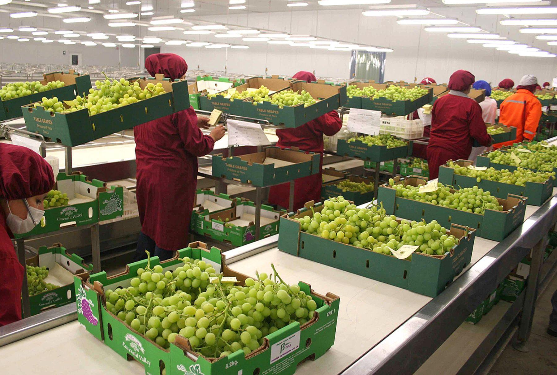 Exportaciones peruanas de uva cayeron en valor y volumen 8% el 2016