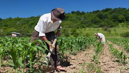 Mañana empieza primera entrega de bonos de mil soles a 500 agricultores de  Piura y Lambayeque 8882dcffca1