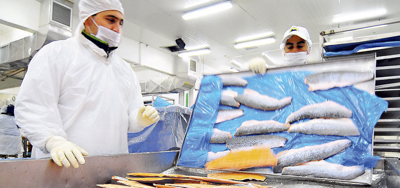 Chile lidera la exportación de diez alimentos en el mundo