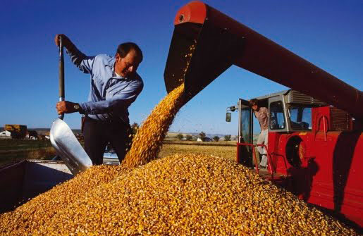 Importación de maíz amarillo duro aumentó 12.45% en el primer semestre del 2017