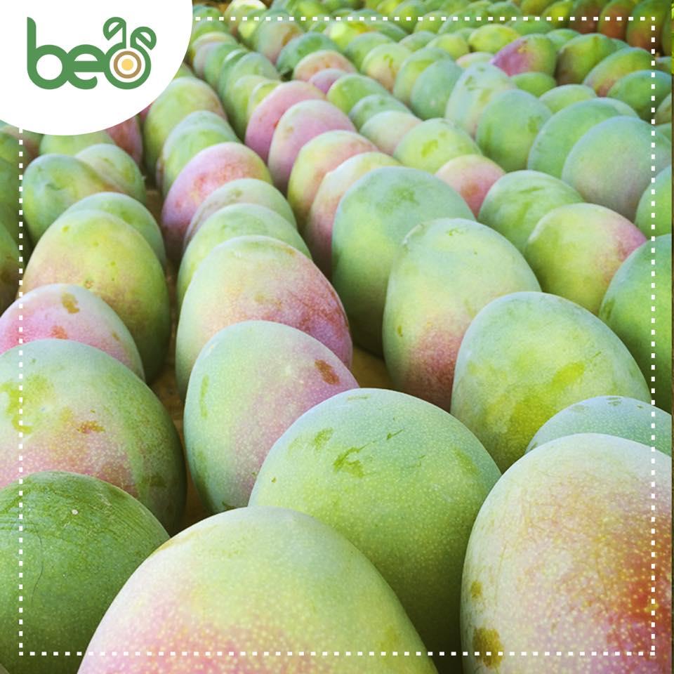 Beo SAC duplicaría sus exportaciones orgánicas este año