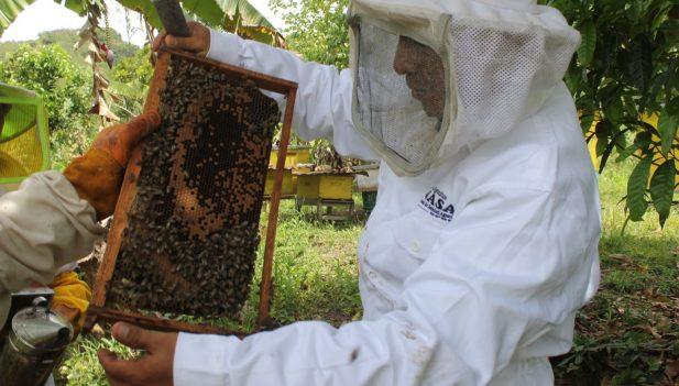 Senasa evalúa colmenas para la aplicación de tratamiento eficaz contra la Varroasis