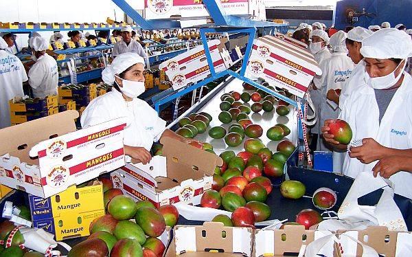 Agroexportación genera más de 800 mil puestos de trabajo