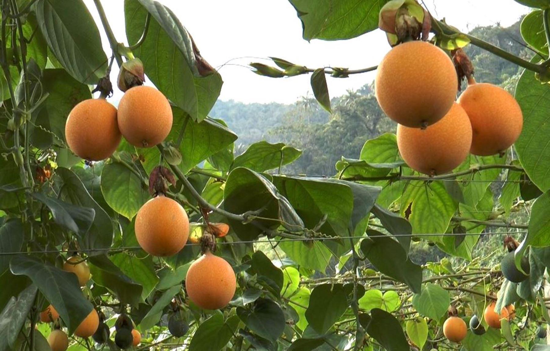 Sierra y Selva Exportadora impulsará seis cadenas productivas en Pasco