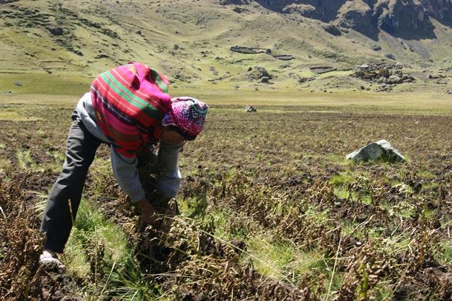 Encuentro de innovación agroecológica destaca proyectos que controlan plagas sin agroquímicos y o...