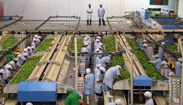 Ejecutivo daría 30 días de vacaciones para el régimen laboral agrario