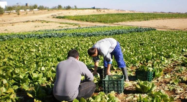 Dinamismo del sector agropecuario peruano se pone en riesgo debido a propuestas inadecuadas del Pode...