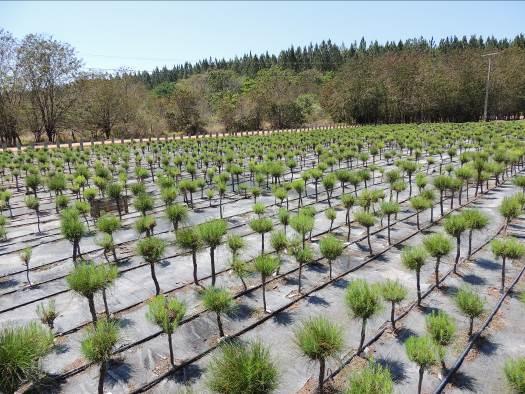 Alistan fondo de financiamiento e incentivos para desarrollo forestal