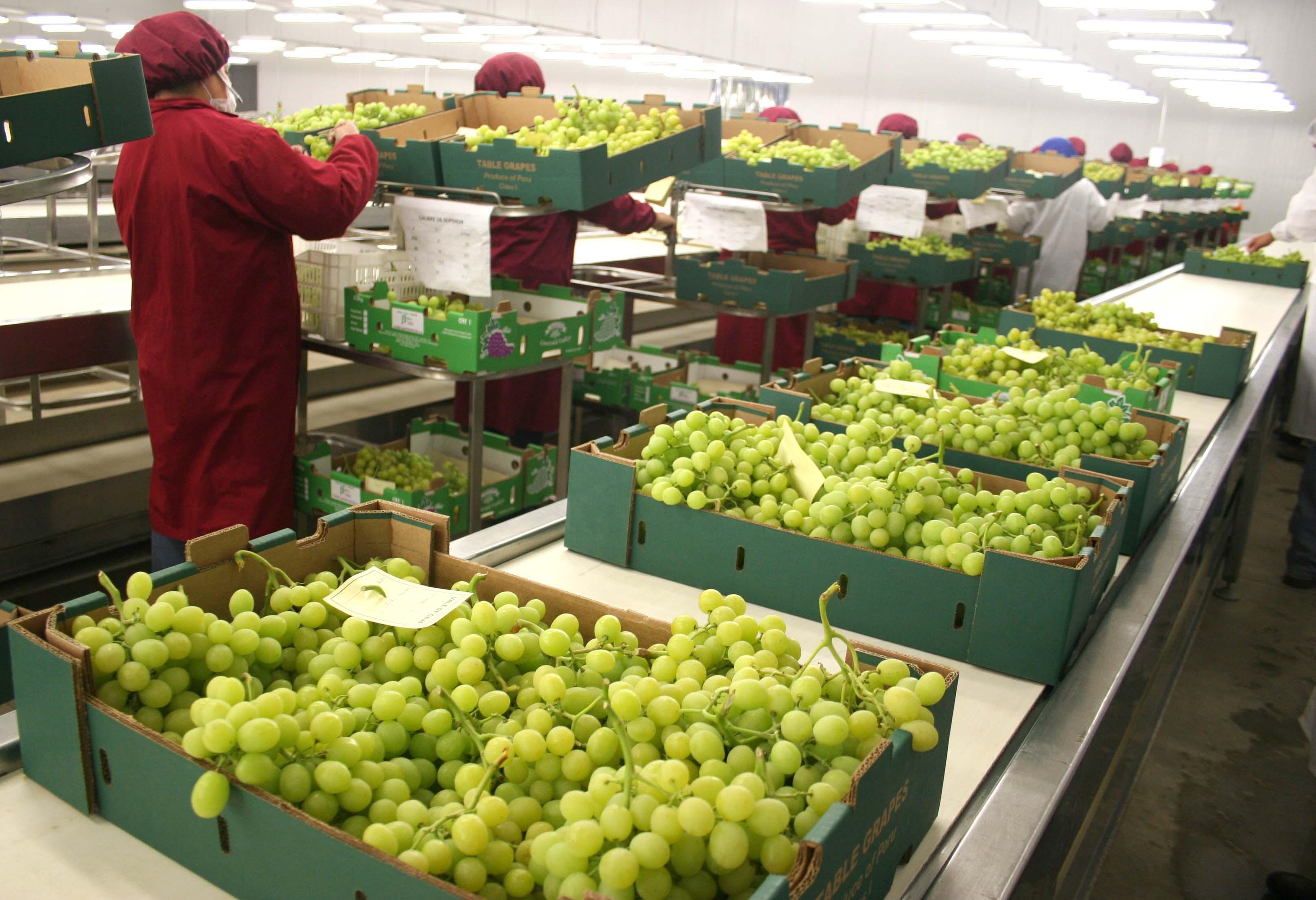Agroexportaciones peruanas crecieron 8%