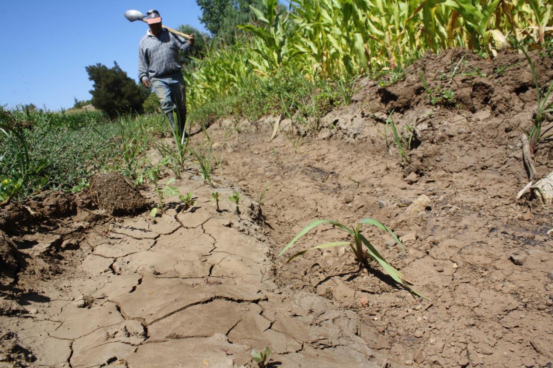 Impactos de La Niña empiezan a sentirse en la agricultura