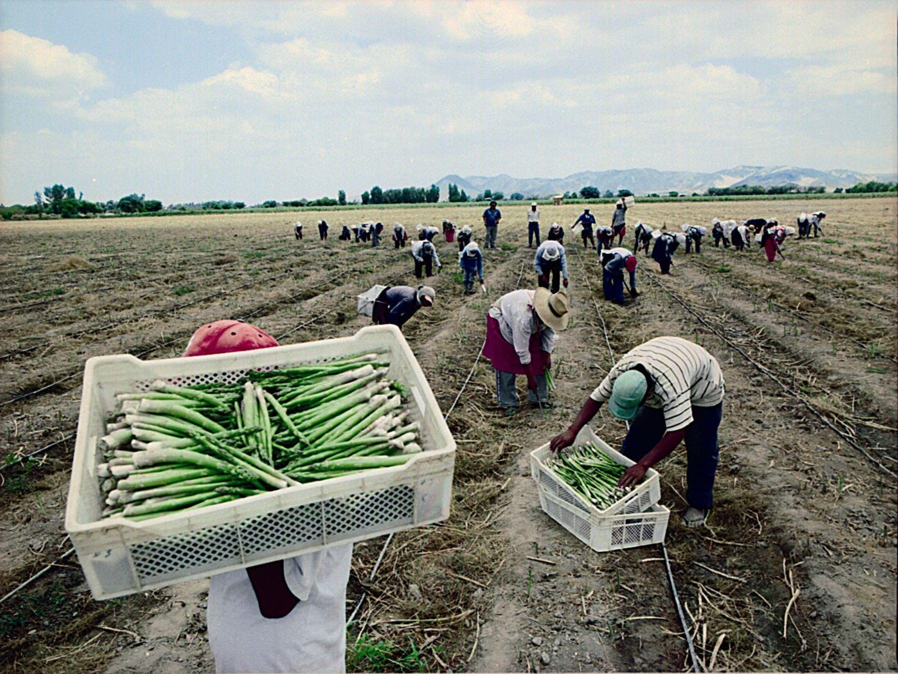 """Clima frío por """"La Niña"""" podría favorecer a los productos de agroexportación"""