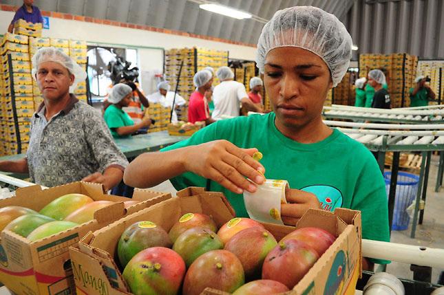 Mal clima en Estados Unidos y Europa provocan menor demanda de mango