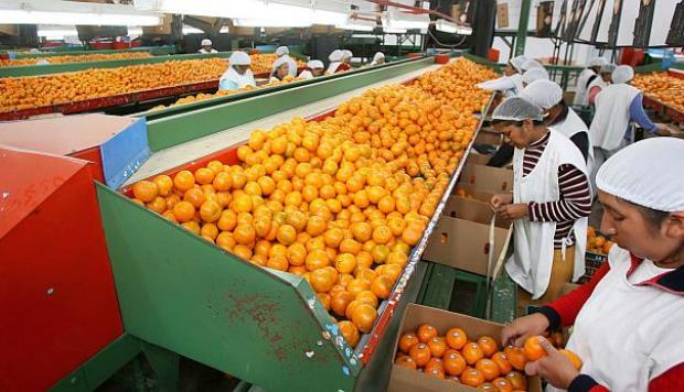 ¿Cuánto golpeó realmente El Niño Costero a los productos agropecuarios de exportación en el 2017?