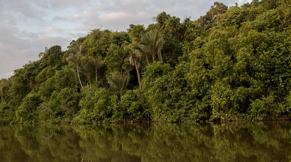 Programa de Conservación de Bosques benefició a más de 170 comunidades nativas en 9 regiones de la Amazonía durante el 2017