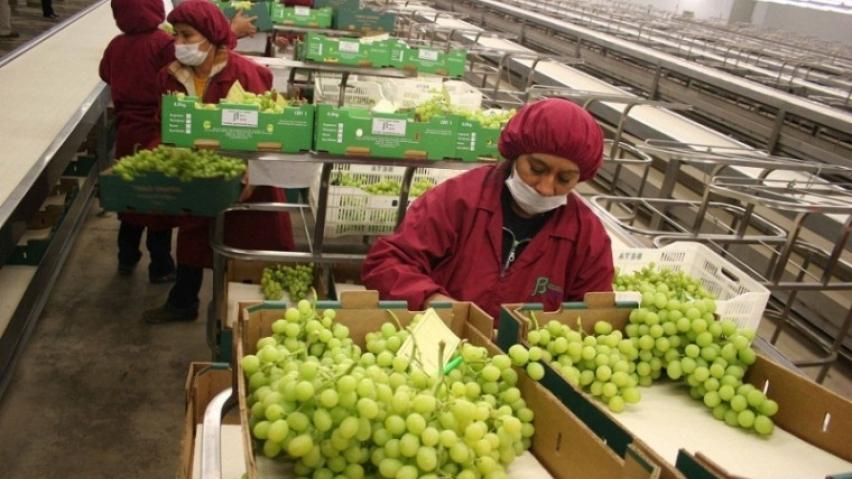 Envíos de alimentos peruanos a mercados del sur asiático sumaron US$ 84 millones en 2017