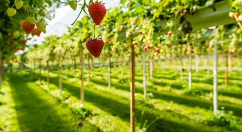 Holanda revoluciona la agricultura: exporta más alimentos que España y Francia juntas con métodos...