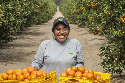 Camposol adquirió plantaciones de mandarina en Uruguay