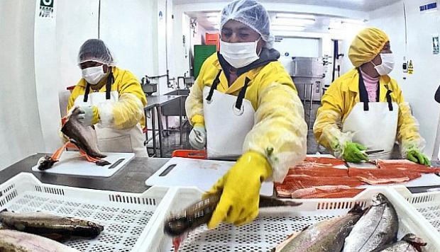 Perú busca aprovechar segmentos dejados por productores de trucha de Chile y consolidarse en Japón