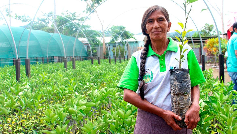 Más de mil familias serán beneficiadas con la entrega de plantones de cítricos