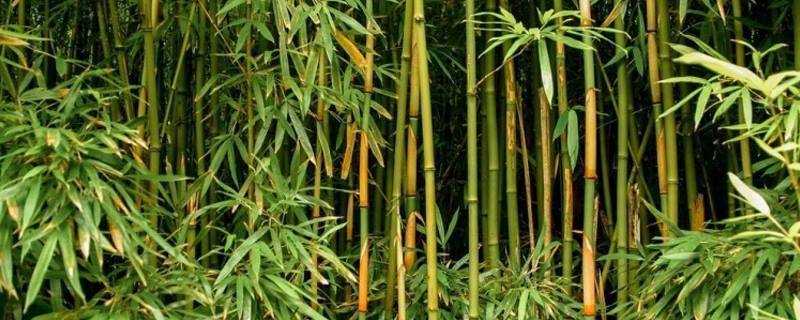 Realizarán taller sobre bambú y sus múltiples usos