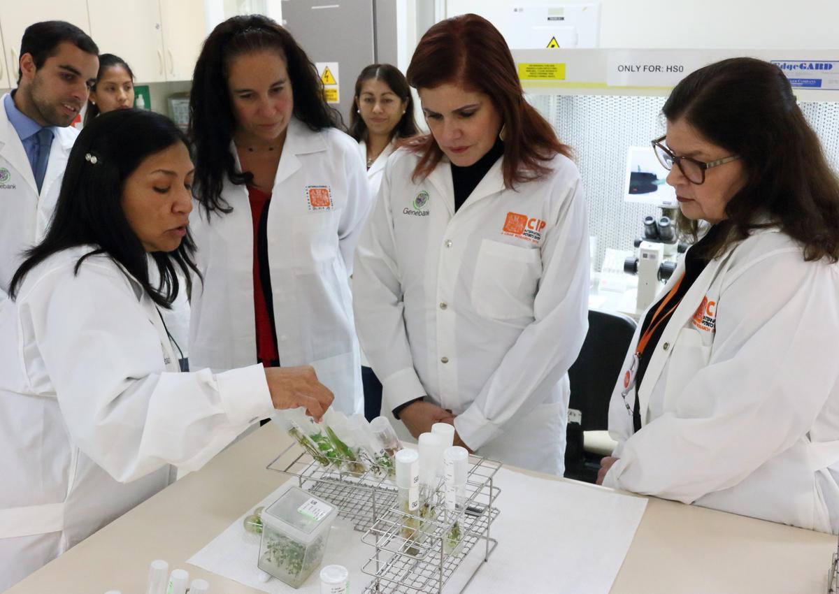 """Mercedes Aráoz: """"La papa es un regalo del Perú y todos debemos trabajar para preservarla"""""""