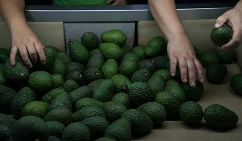 Colombia quiere seis mercados más para colocar sus paltas