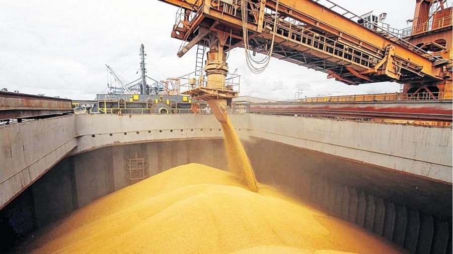 Importaciones de trigo alcanzan valores de casi US$ 227 millones