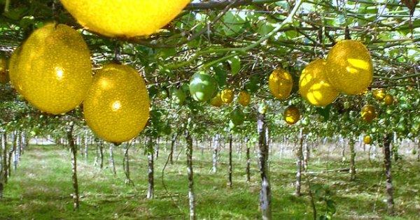 Norma europea para frenar importaciones de alimentos con altos niveles de cadmio afectaría también...