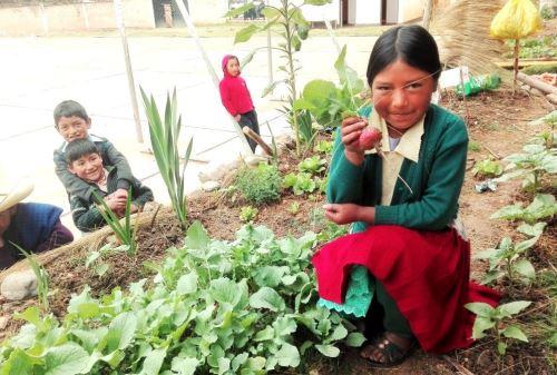 Implementan huertos escolares para sembrar hortalizas orgánicas