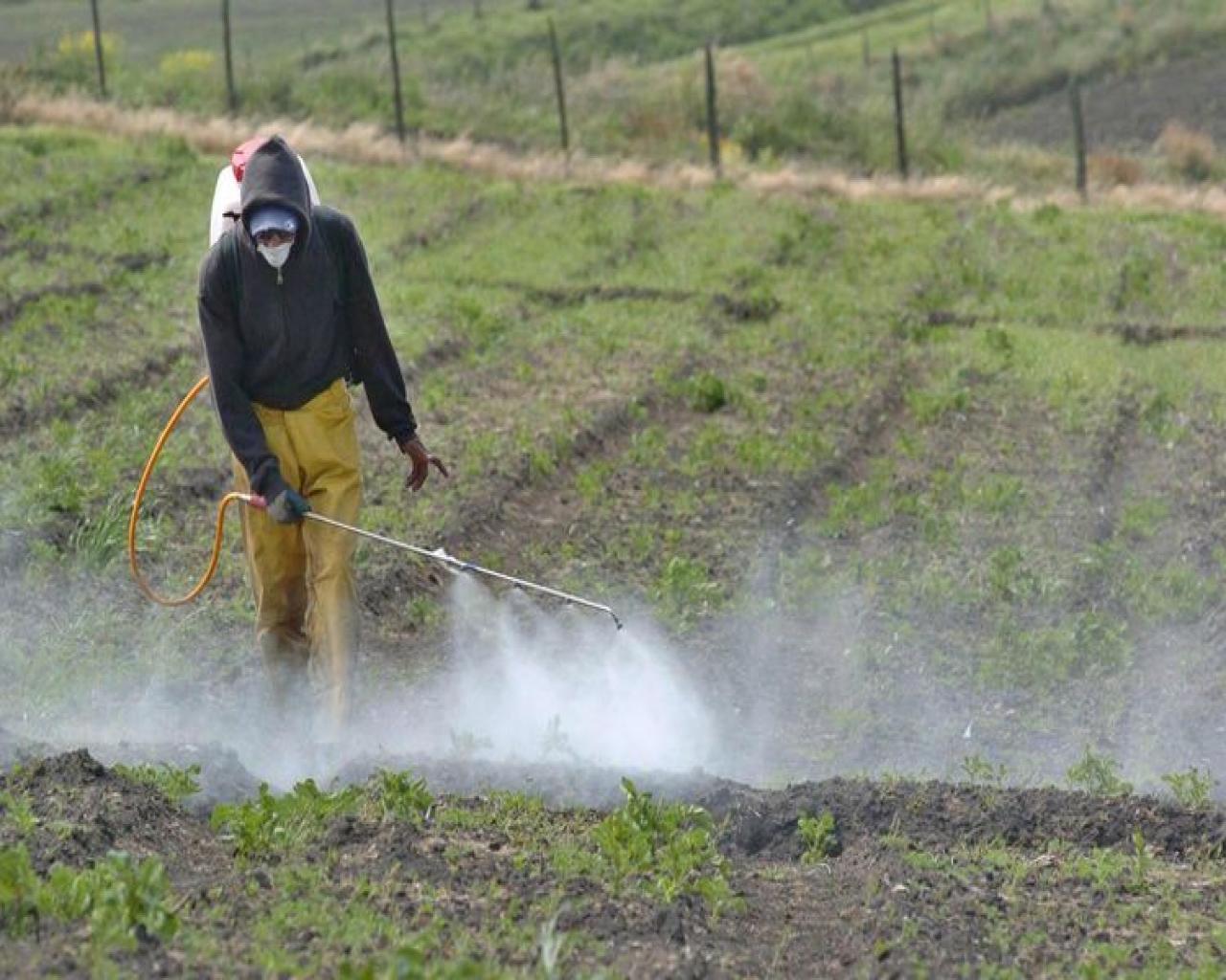 Minagri prohibirá el uso de plaguicidas altamente tóxicos