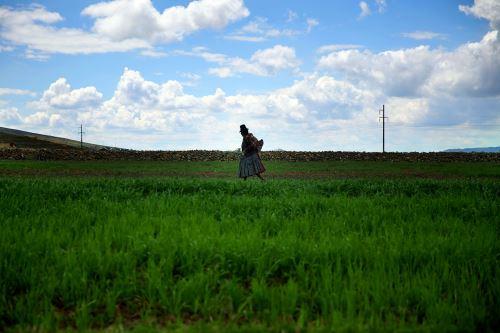 Este año se sembrarían 50 mil hectáreas de pastos en 21 regiones