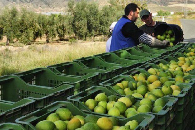 Agro Fresh Mar Azul instalará nueva planta en Piura