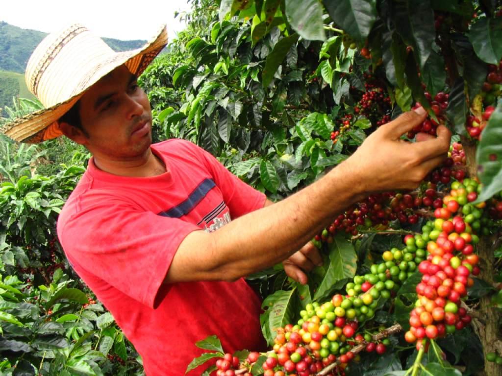 Crean Grupo de Trabajo encargado de evaluar la ejecución del Plan Nacional de Renovación de Cafeta...