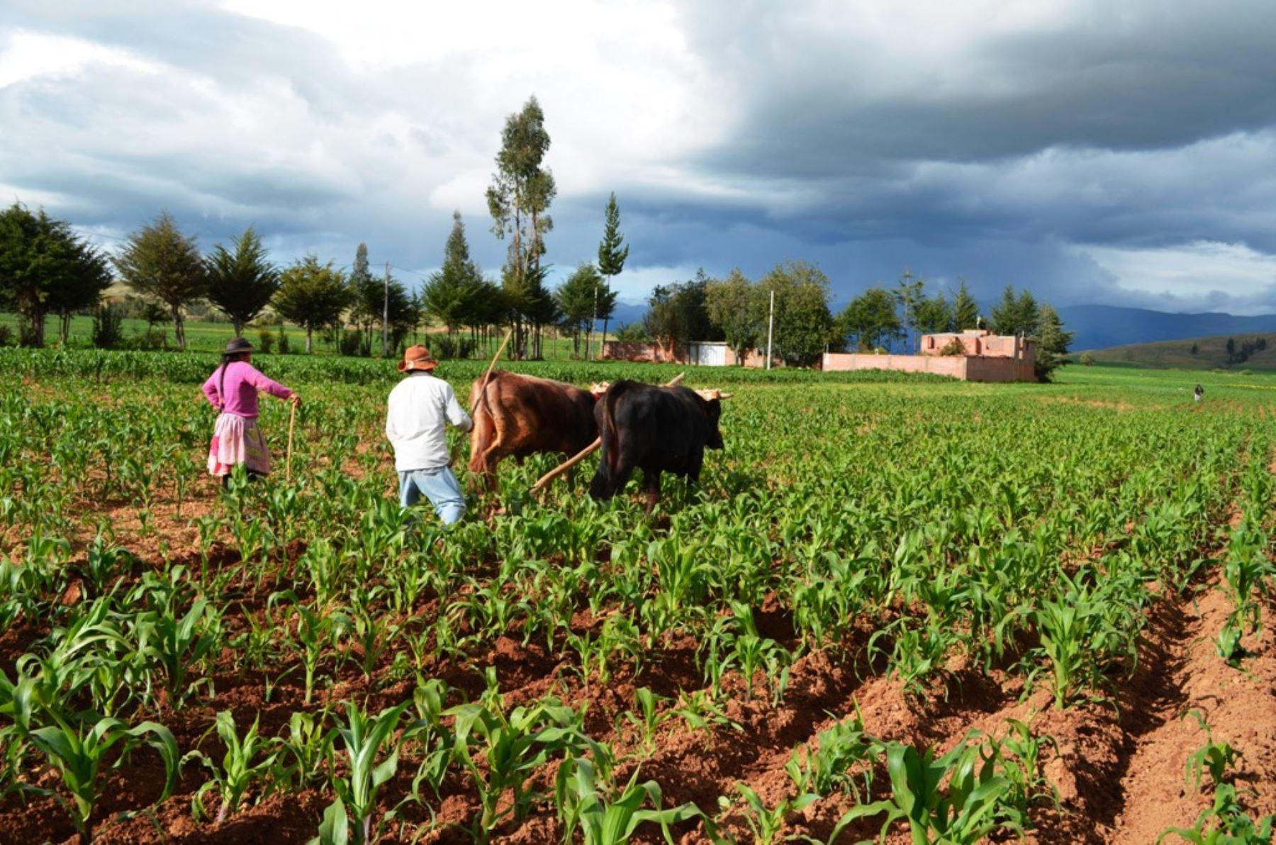 Minagri lanzó metas del sector agrario en el marco de la Agenda de Conmemoración del Bicentenario