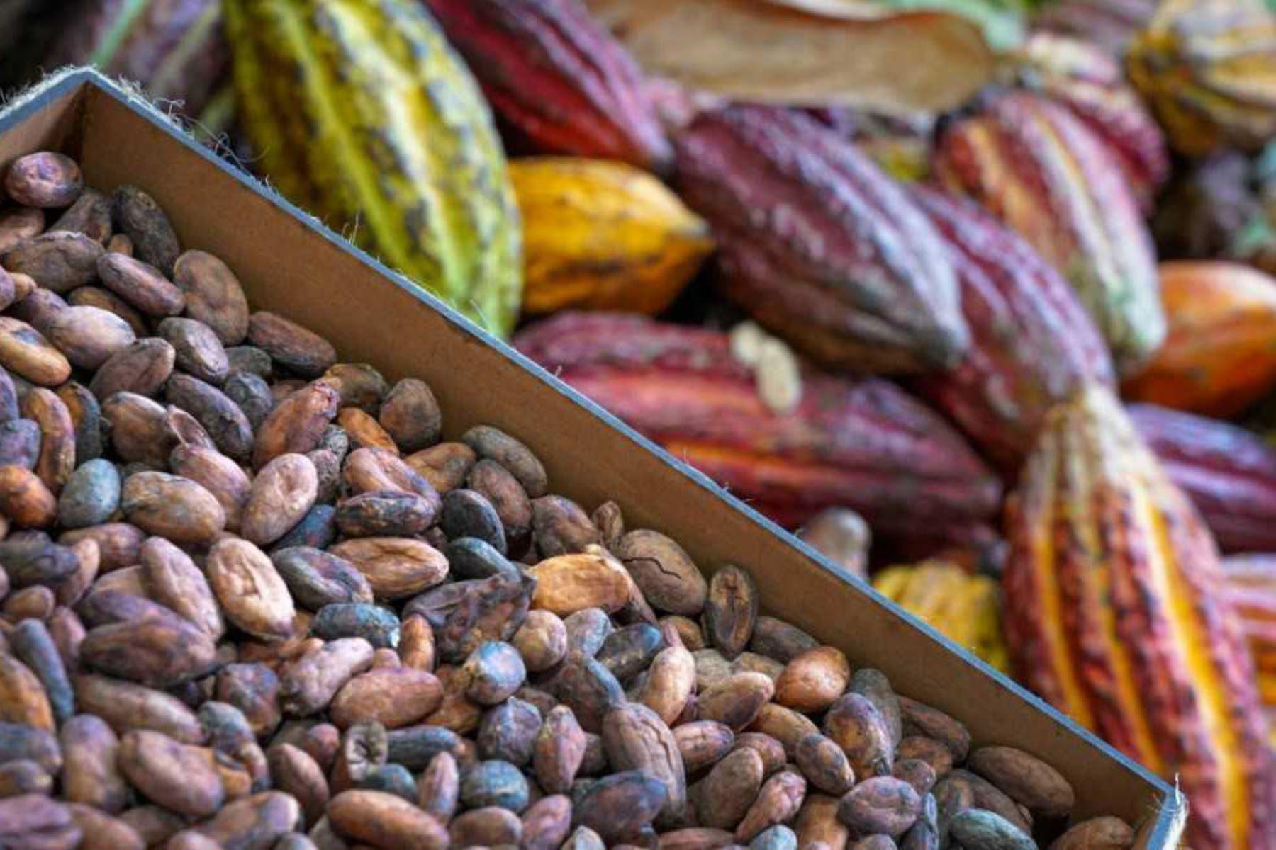 Cacao peruano despierta el interés de importadores alemanes