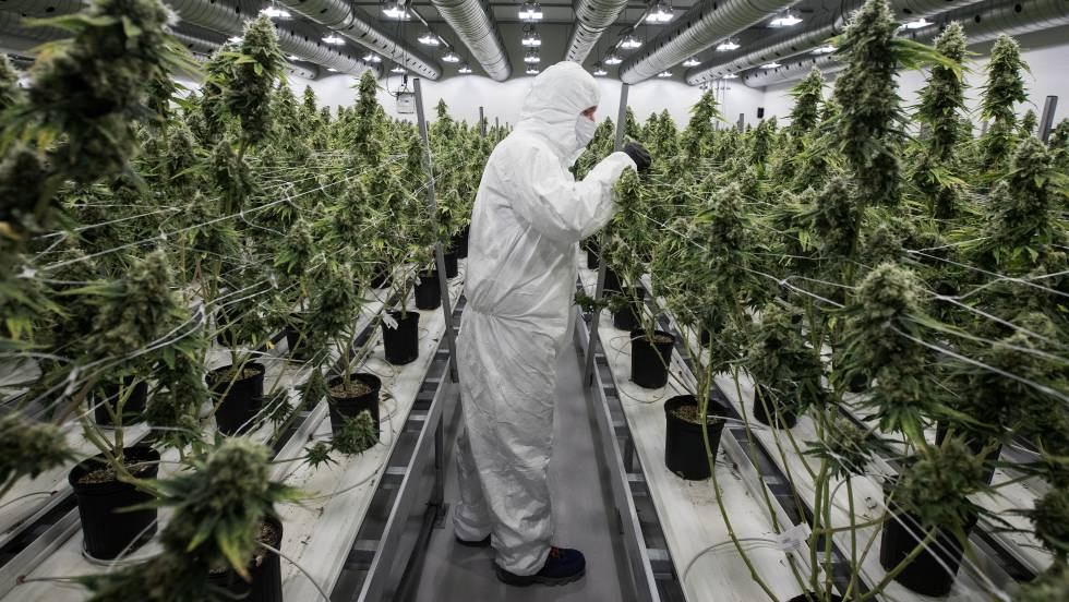 Una de las mayores tabacaleras del mundo entra al mercado de la marihuana con una inversión de US$ ...