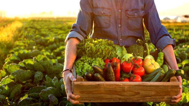 ¿Puede un mundo 100% orgánico producir suficiente alimento para toda la población?